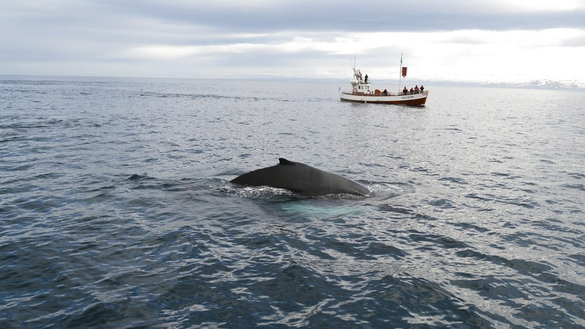 A Guide to Booking a Whale Watching Trip